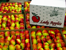 Apple Packing, Storage and Shipping located in the Hudson Valley : George W Saulpaugh and Son
